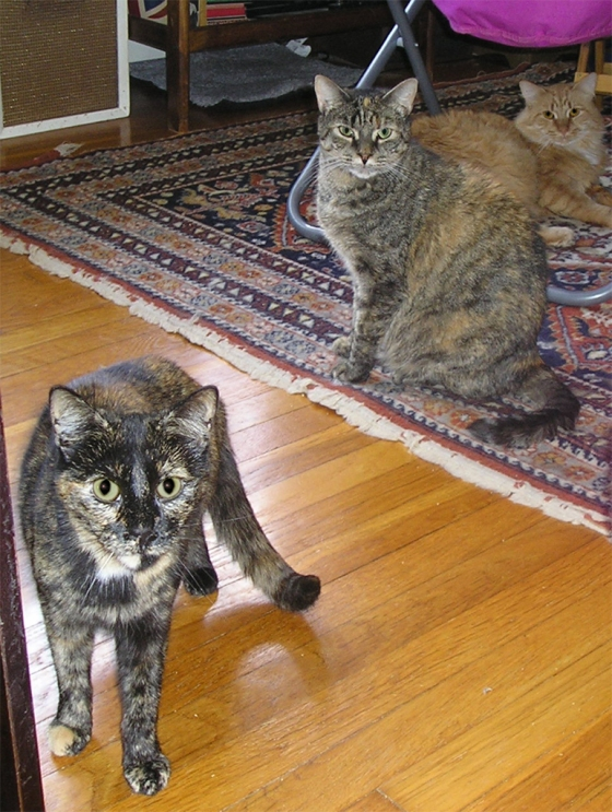 Kukla (foreground), Danika (in the middle) and Leo (at the back)