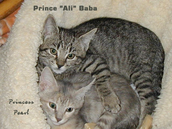 Ali and PearlyPearl as kittens